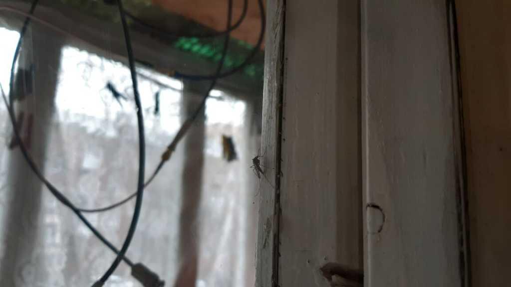 komar-ne-spit.jpg