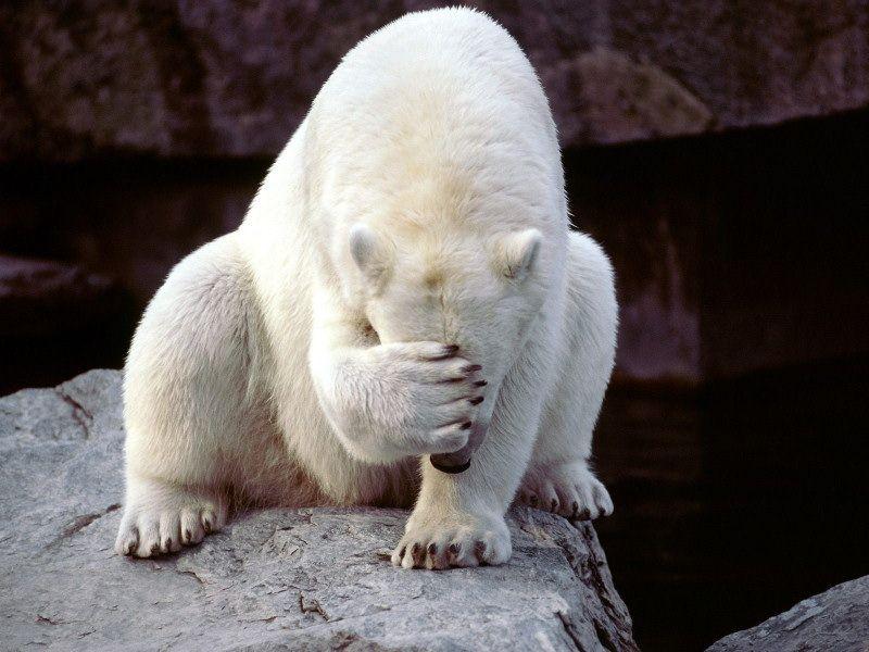 white-bear.jpg